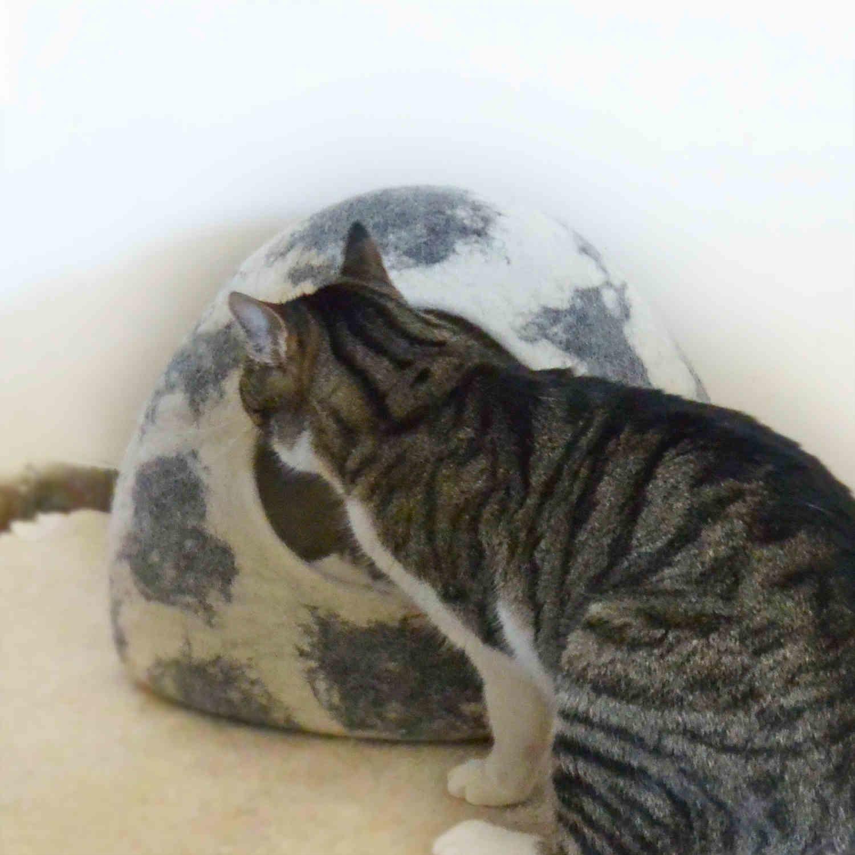 Igloo felt cat cave / wool cat house white w. grey shades