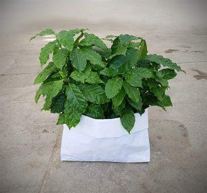 Reuse the paper bag-watertight-white_by Chryssa Adrakta
