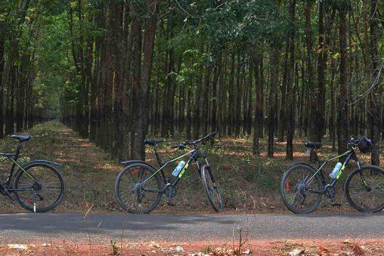 Cycling through the rubber plantations of Canbodia and Vietnam