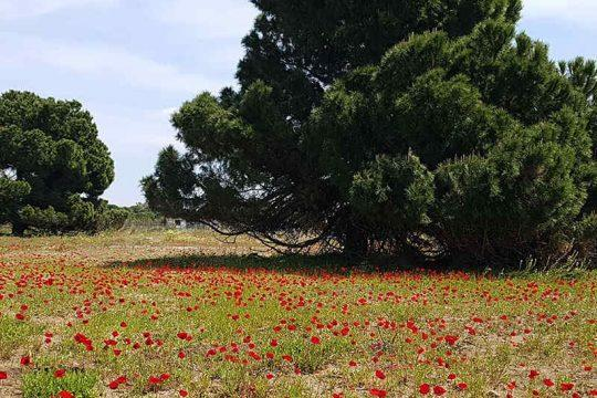 happy spring,- field of poppies